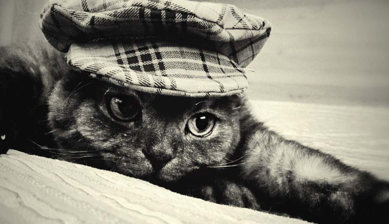 Кот вне закона, или котам закон не писан!