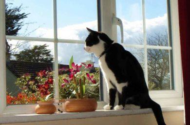 Кот застрял в пластиковом окне