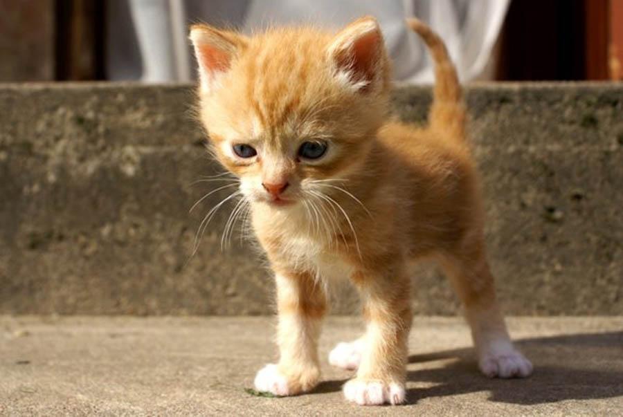 Котенок худой