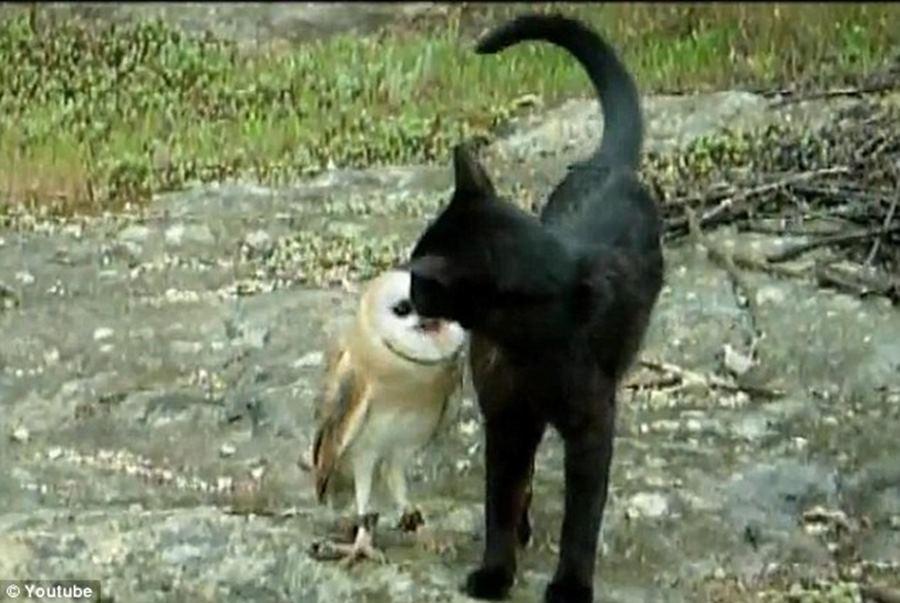 Котенок и совенок: фото