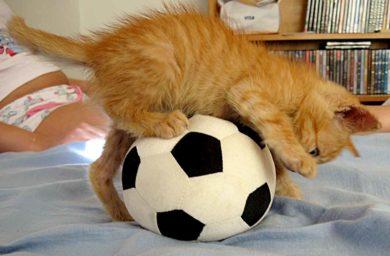 Котенок играет с мячиком