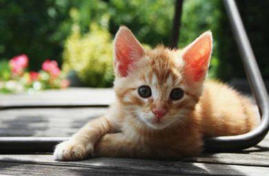 Котенок не растет и очень худой