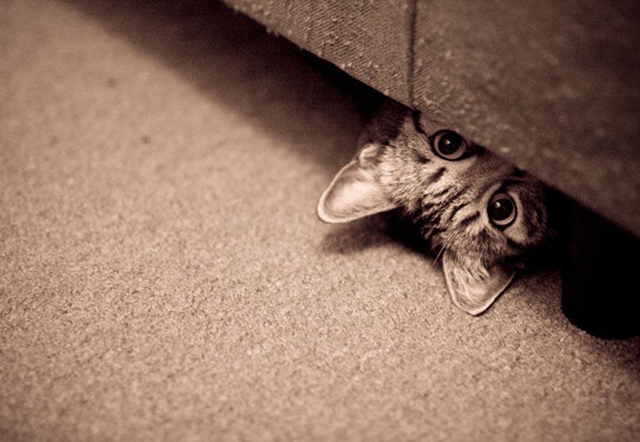 Котенок прячется в темное место