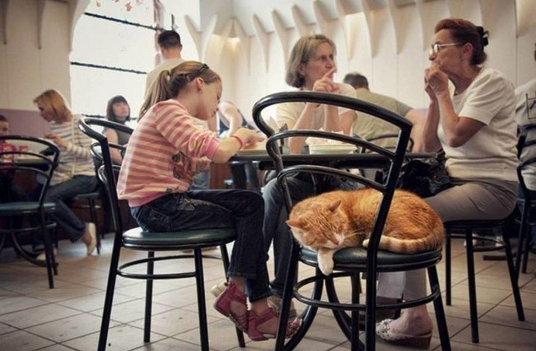 Пышечная на Большой Конюшенной — первое котокафе в Петербурге