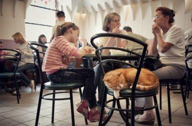 Котокафе в Санкт-Петербурге