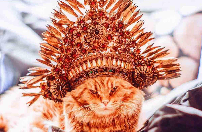 Знакомьтесь — Котриарх, или кот Котлета