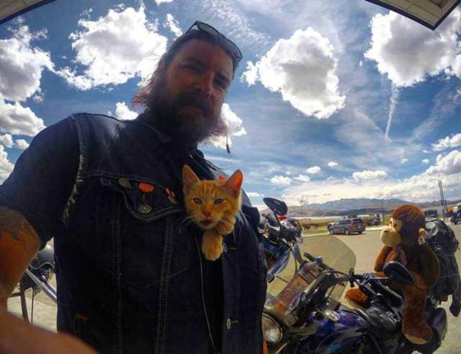 Коты и байкеры