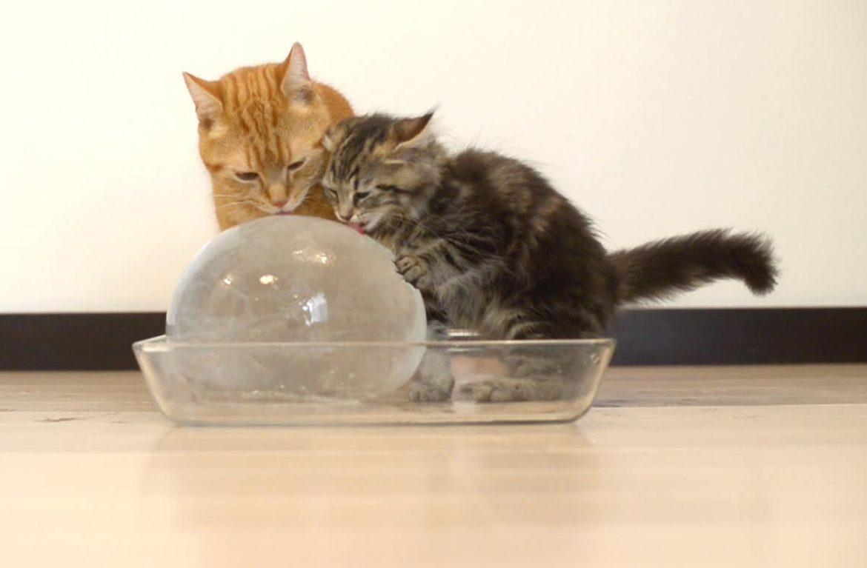 Коты и ледяной шар, или полезное мороженое