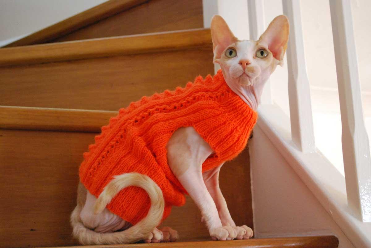 Коты которые не линяют