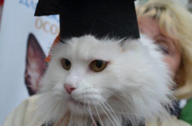 Сколько котов в эрмитаже