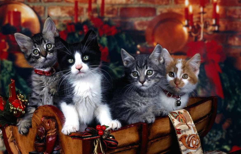 Коты поздравляют, или советы от самых мудрых
