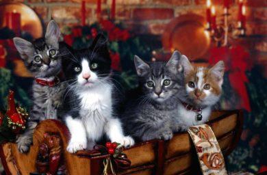 Коты поздравляют