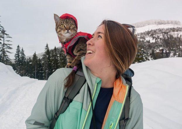 Коты путешественники: фото