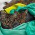 Коты-путешественники: фото, которые ломают стереотипы