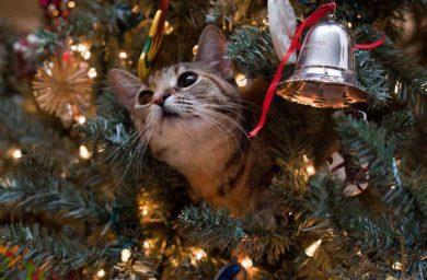 Коты роняют елки
