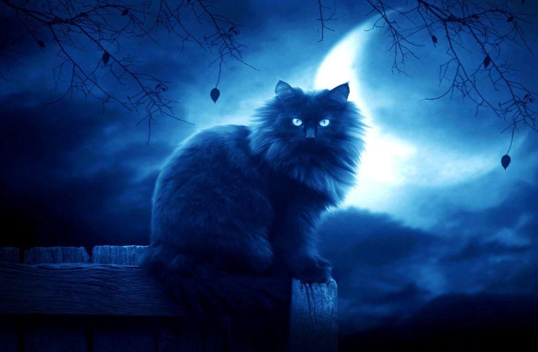 Как видят коты домовых