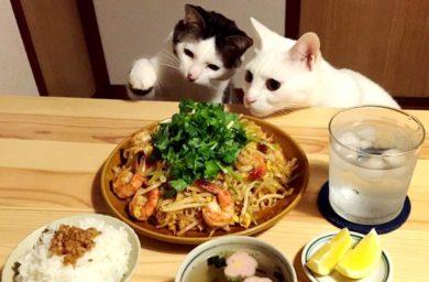 Японские коты - фото