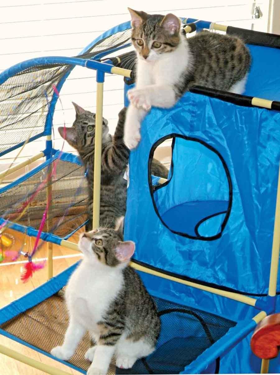 Котята кошки Копирки