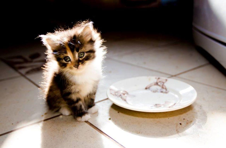 Кот ничего не есть чем кормить