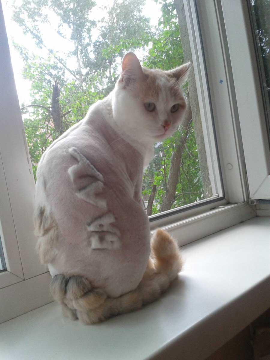 Красивые стрижки кошек: фото