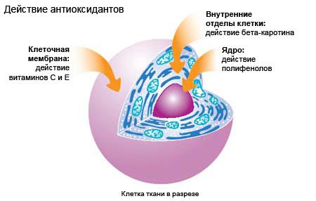 Игорь цаленчук как похудеть легко и навсегда