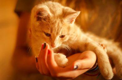 Лишай от кошки у человека: лечение