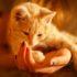 Лишай от кошки у человека: лечение и симптомы