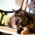 За что мы любим пожилых кошек?