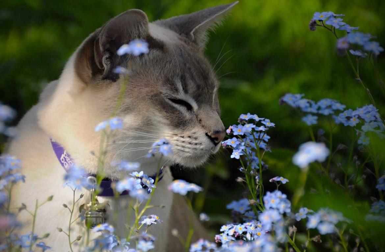 Какой запах нравится кошкам?