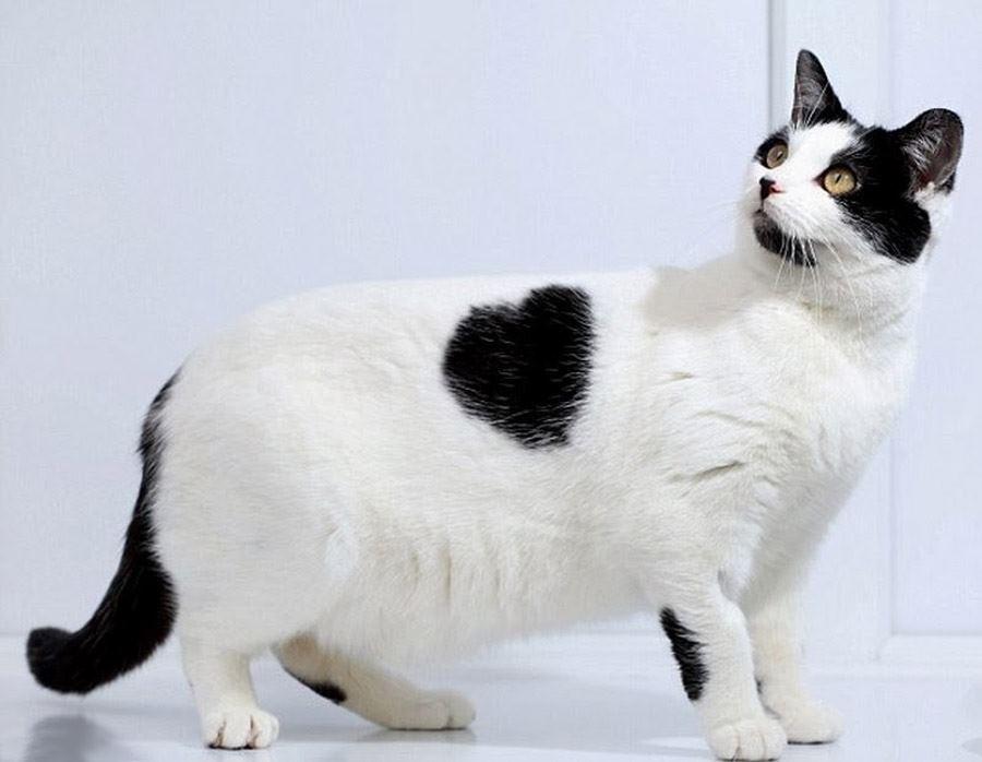 Любовь кошек: фото