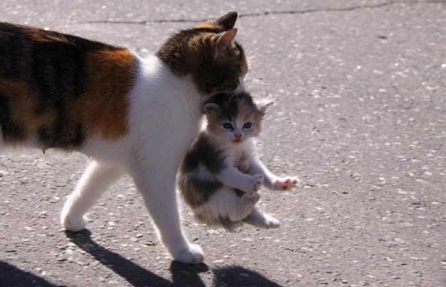 Мама кошка
