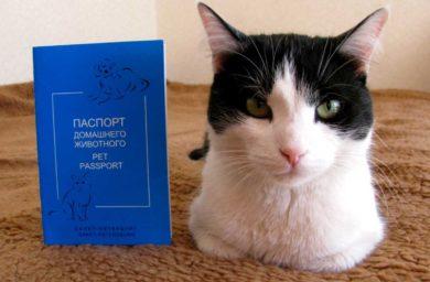 Образец международного ветеринарного паспорта кошек