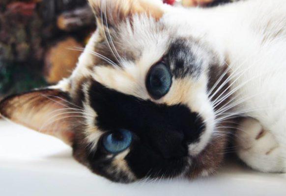 Мода на кошек