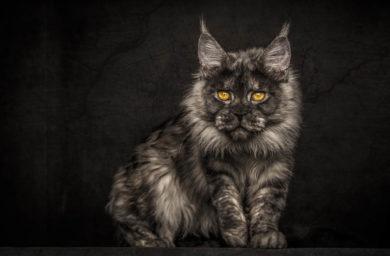 Модные кошки: фото