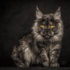 Модные породы кошек: галерея усов и хвостов