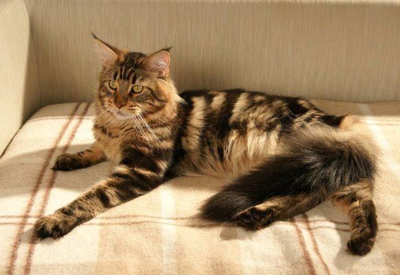 Модные породы кошек