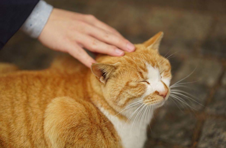 Может ли человек заразить кошку лишаем?