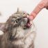 Как передаётся бешенство от кошки к человеку