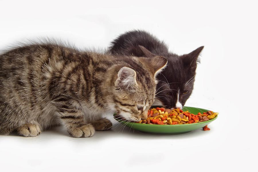 Можно кормить кота сухим и мокрым кормом