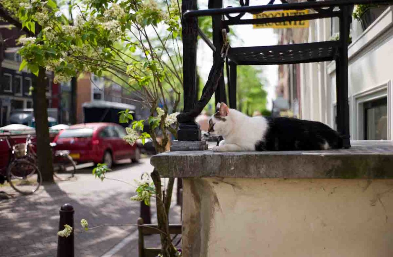 Приют на воде «Кошачья лодка» и музей кошек в Амстердаме