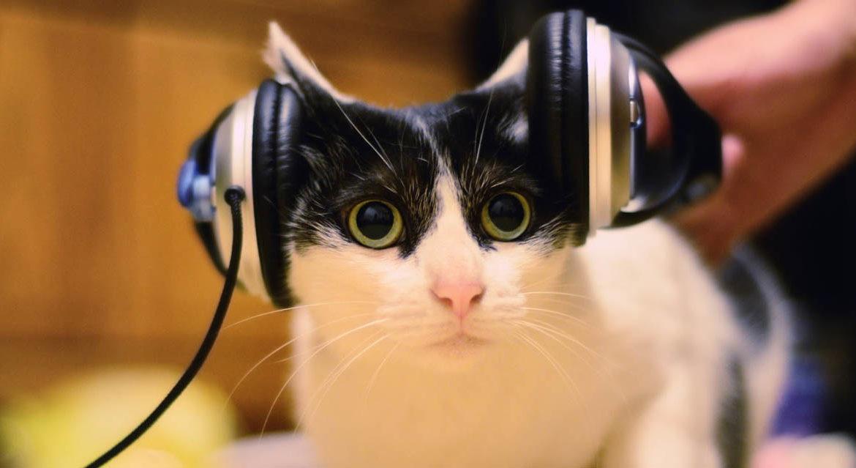Музыка для кошек