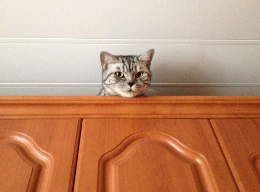Необычные способности кошек