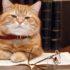 Необычные способности кошек: а вдруг ваш питомец — гений?