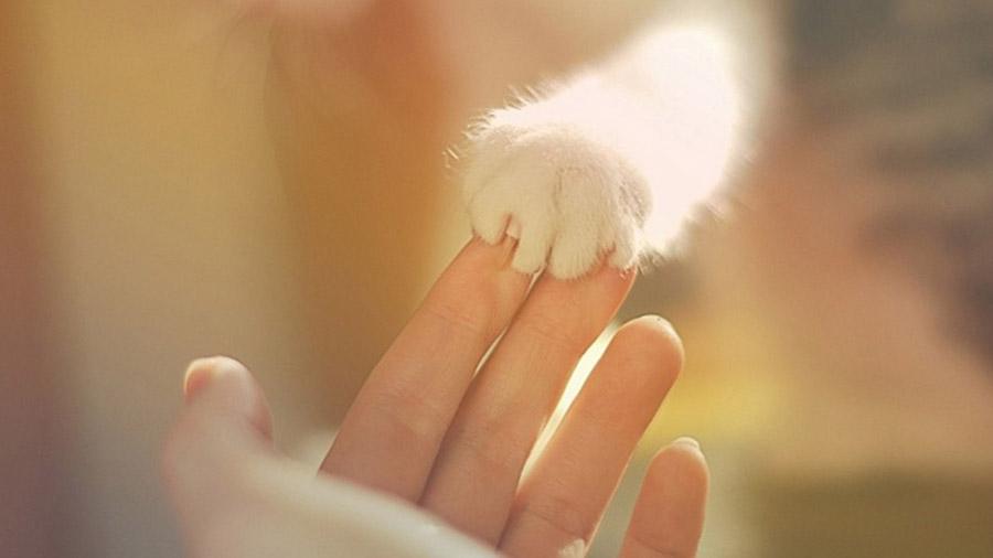 Непослушные котята на 8 марта