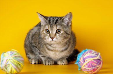 Непроходимость желудка у кошек