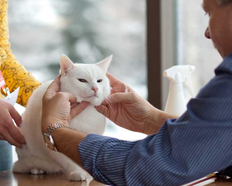 Невроз у кошек