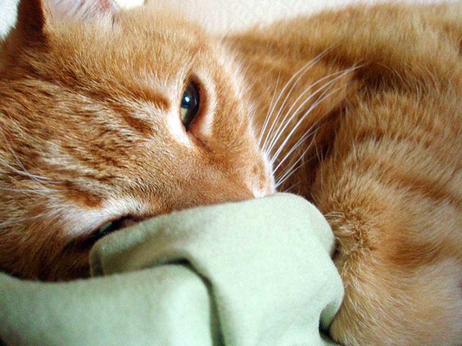 Симптомы невроза у кота