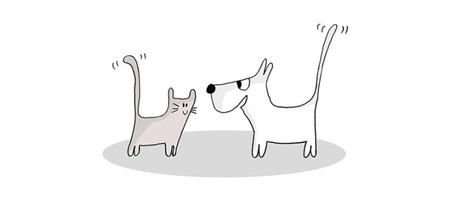 Независимость кошек