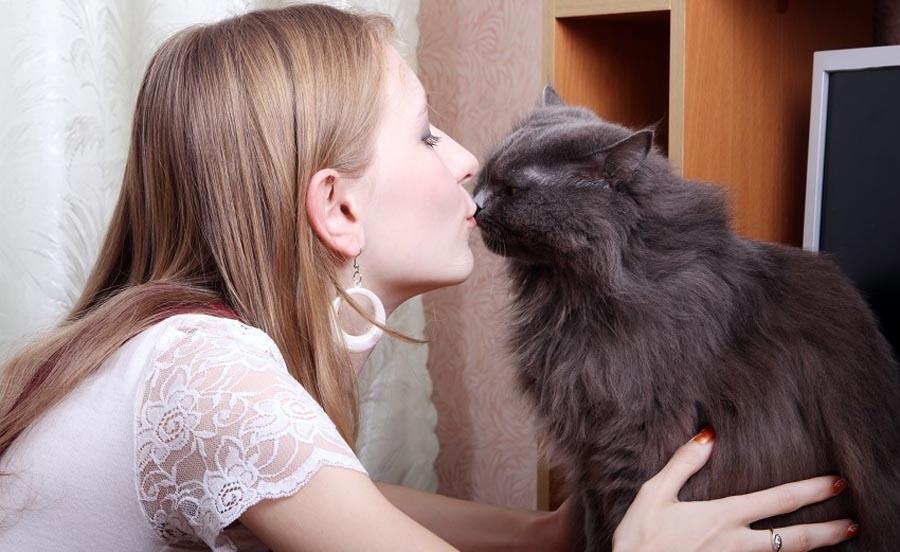 Новое поколение за кошек