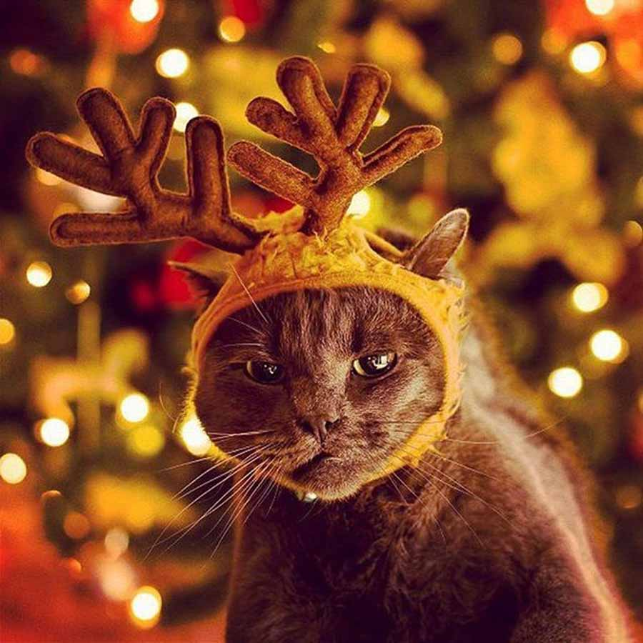Новогодние аксессуары для котов
